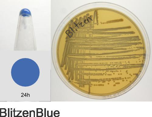Protein Paint Box - ATUM